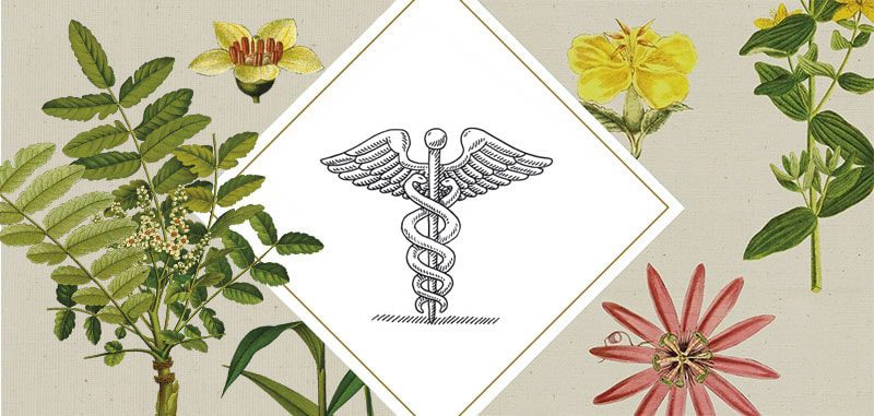 terrapia аптеки