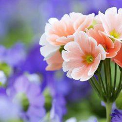 Цветница – празникът на цветята и красотата
