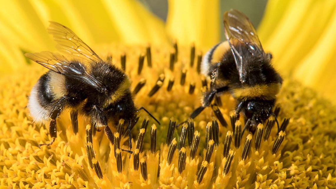 Пчелите – тези удивителни създания - снимка