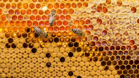 Пчелна пита - снимка
